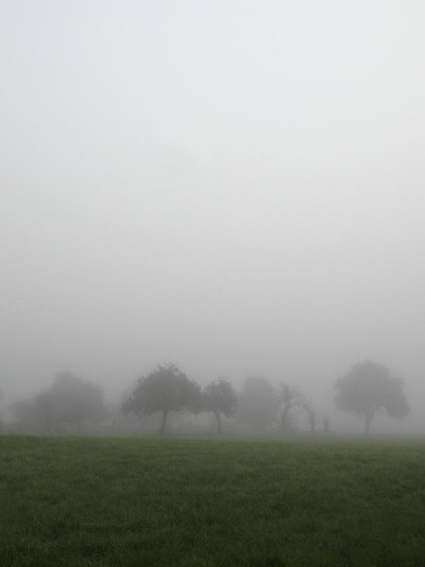 Streuobstbäume im Nebel ...