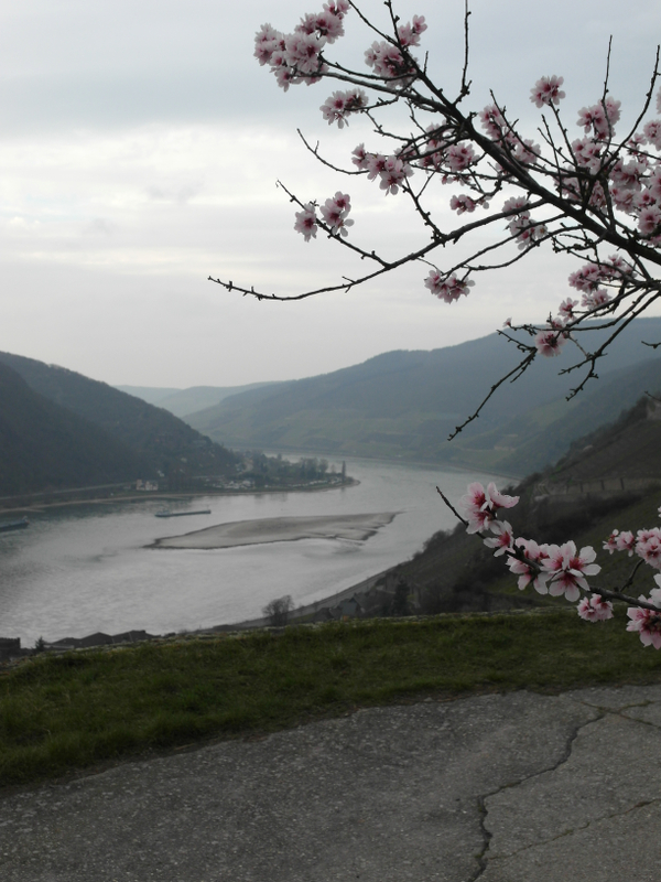 Rheintal im Frühling