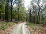 Frühlingswaldweg