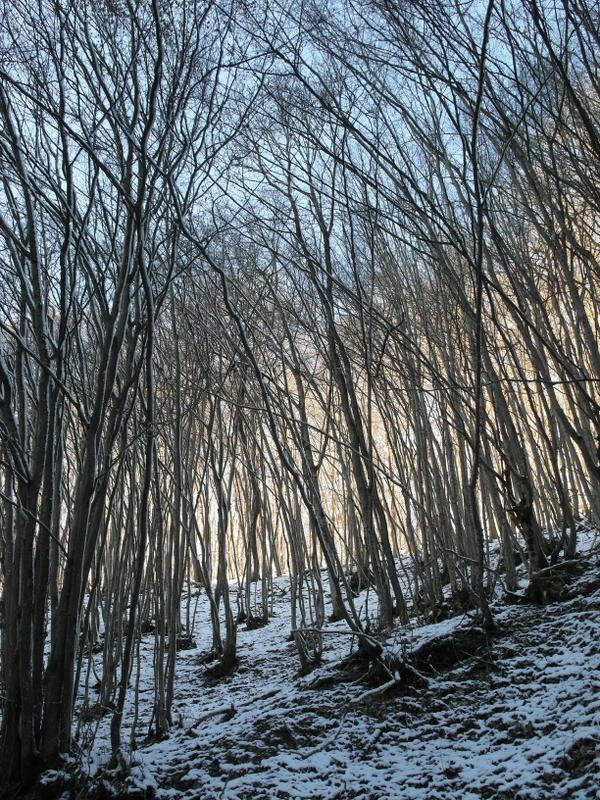 Himmel hinter kahlen Bäumen