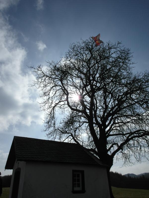 Marienkapellchen; Dach überm Kopf, Drache im Baum.