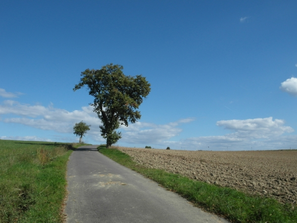 ewiger Birnbaum Zweibrücken