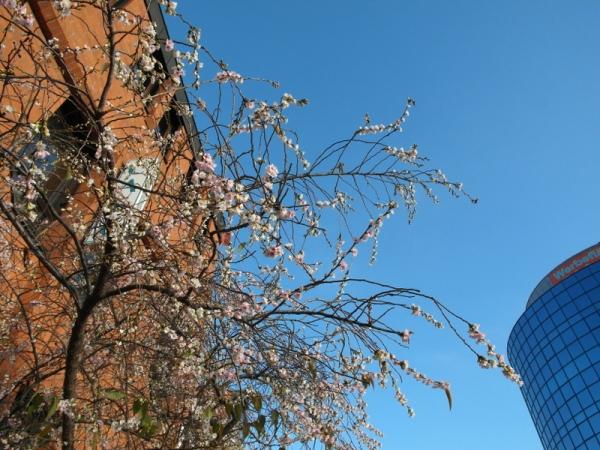 Koblenz, Ende November: die letzten Blätter mit den ersten Blüten.