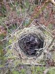 rb-nest