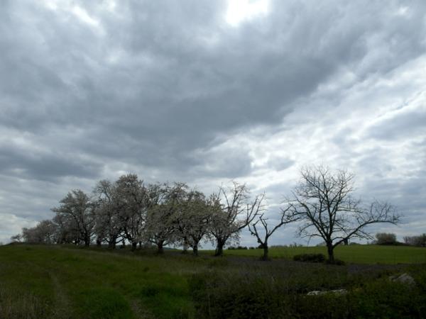 Wetter über Blüteresten.